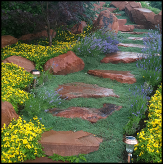 Wet rock pathway with groundcover