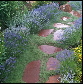 Wet rock pathway with lavendar